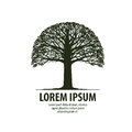 Tree Logo. Silhouette Of Oak Icon. Nature, Ecology Symbol. Vector Illustration Royalty Free Stock Images - 73012859