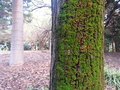 Green Moss On Side Of A Tree In A Park Royalty Free Stock Photo - 73042805