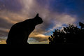Cat In Backlight Royalty Free Stock Images - 73104139