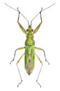 Green Bug Royalty Free Stock Images - 73158399