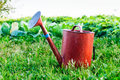 Old Metal Watering Can Garden On The Bright Green Grass. Royalty Free Stock Image - 73160506