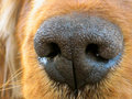 Nose Stock Image - 73180121