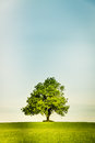 Lonely Tree On A Green Field Royalty Free Stock Image - 73218456