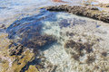 Tide Pools: Beach Reef At Blue Holes Stock Photo - 73246360