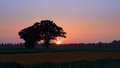Tress On Farm Field In Cloudless Sunset Royalty Free Stock Image - 73288216