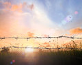 Old Barbed Wire Fence Royalty Free Stock Photo - 73334845