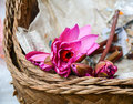 Waterlily Flowers At Market In Gili Meno Island, Indonesia Stock Image - 73337051