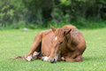 Horse Resting On Meadow Royalty Free Stock Photos - 73349038