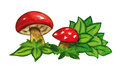 Watercolor Illustration Of Red Mushrooms  On White Background. Stock Photo - 73366480