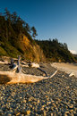 Rocky Beach And Driftwood Logs Royalty Free Stock Image - 7343046