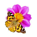Butterfly And Flower Royalty Free Stock Photos - 7349108