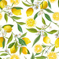 Seamless Pattern. Lemon Fruits Background. Floral Pattern Stock Images - 73429274