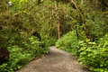 Wide Path Leading Into Rainforest In Tongass National Forest, Alaska Royalty Free Stock Photo - 73440385