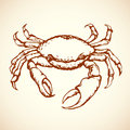 Crab. Vector Drawing Stock Photography - 73466532