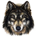 Wolf Head Royalty Free Stock Photo - 73534295