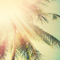 Sunshine In Palm Tree. Holiday Travel Adventure Concept. Vintage Stock Images - 73582394