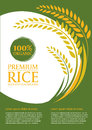 Paddy Rice And Green Background - Layout Template Size A4 Vector Design Royalty Free Stock Images - 73592259