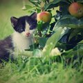 Beautiful Small Kitten With Blue Eyes. Stock Image - 73594871