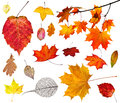 Set Of Various Autumn Leaves Isolated On White Stock Photos - 73629313