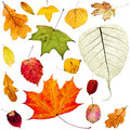 Set Of Colorful Autumn Leaves Isolated On White Royalty Free Stock Images - 73629699