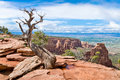 Dry Tree In Colorado National Monument Stock Images - 73681754