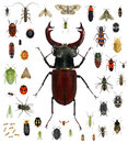 Insect Collection Stock Photo - 73682320