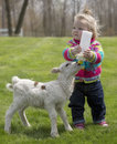 Cute Little Girl With Lamb Royalty Free Stock Photos - 73709838