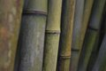 Bamboo Stock Images - 73779644