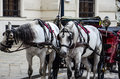 Horses In Vienna, Austria Stock Photography - 73924162