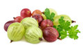 Red Green Gooseberry On White Royalty Free Stock Photo - 73956095