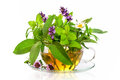 Teacup With Fresh Healing Herbs Royalty Free Stock Image - 73988086