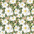 Seamless Floral Wallpaper With White Flowers Magnolia, Peonies. Watercolour Stock Image - 73998121