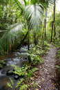 Tropical Jungle Path Stock Photos - 7405873