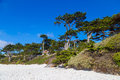 White Beach In Carmel-by-the-Sea, California, USA Stock Images - 74001214