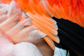 Detail Of The Feathers Of A Flamingo. Royalty Free Stock Photos - 74007558