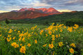 Brilliant Sunrise With Colorful Wildflowers, Utah. Royalty Free Stock Photos - 74014908