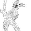 Zentangle Stylized Rhinoceros Hornbill Bird (Buceros Rhinoceros) Stock Image - 74061351