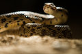 In Darkness A Snake Is There Stock Images - 74123884