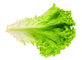 Fresh Lettuce Isolated On White Top View Royalty Free Stock Photos - 74171878