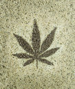 Cannabis Hemp Seeds Leaf Close Up Background Royalty Free Stock Photography - 74180187