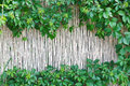 White Bamboo Fence Texture Background With Green Grape Leaves Stock Photos - 74199923