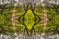 Kaleidoscopic Pattern From Spring Alley Of Branched Trees And Sunny Green Grass Stock Photos - 74303823