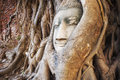 Buddha Head In The Tree Trunk, Ayutthaya, Thailand Stock Images - 74304374