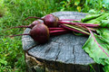 Freshly  Beets On An Old Tree Stump Stock Images - 74386174