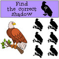 Children Games: Find The Correct Shadow. Cute Bald Eagle Sits On The Tree Branch. Royalty Free Stock Photos - 74394778