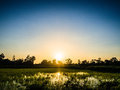 Rice Agriculture Farm Silhouette Stock Images - 74398424