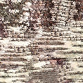 Close-up Bark Of Birch Texture Stock Images - 7444094