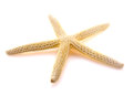 Sea Shell In The Shape Of Star Isolated Royalty Free Stock Photo - 74407685