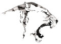 Black And White Monochrome Painting With Water And Ink Draw Lion Illustration Stock Photos - 74412553