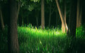 Dark Forest 3d Render Royalty Free Stock Images - 74415529